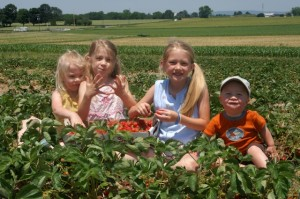2014 Strawberry Season Field Trips @ Strawberry Farm | Ashburn | Georgia | United States