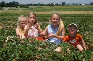 2014 Strawberry Season Field Trips @ Strawberry Farm | Ashburn | Georgia | United States